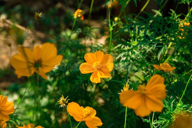 Цвет естественного света утра стоковые фотографии rf