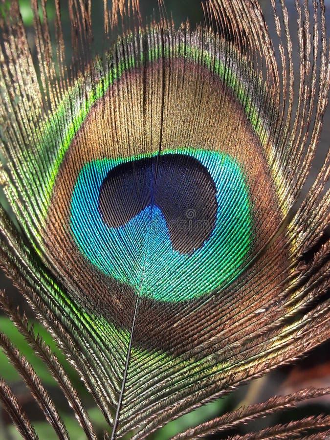 Цвет жизни стоковые изображения rf