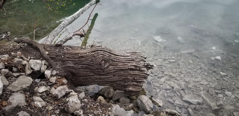 Цвет журнала текстуры древесины смещения полный стоковые изображения rf