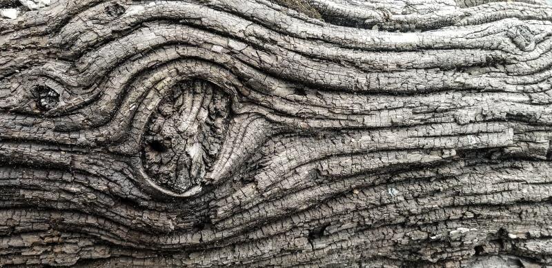 Цвет журнала текстуры древесины смещения стоковое фото rf
