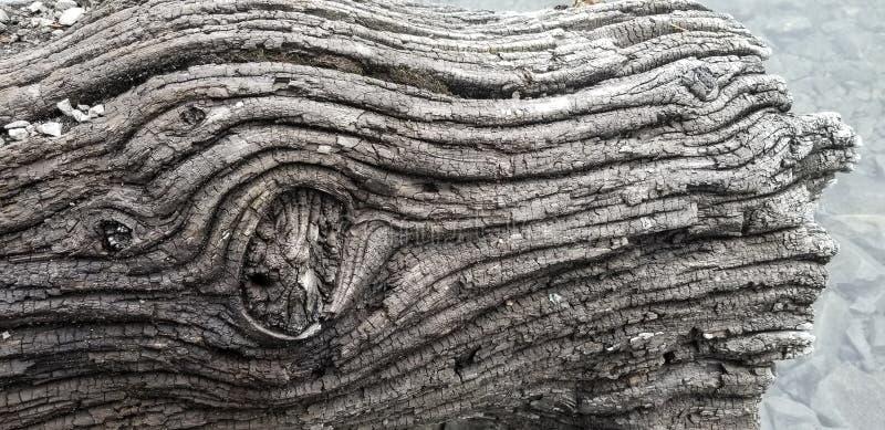 Цвет журнала текстуры древесины смещения стоковые фотографии rf