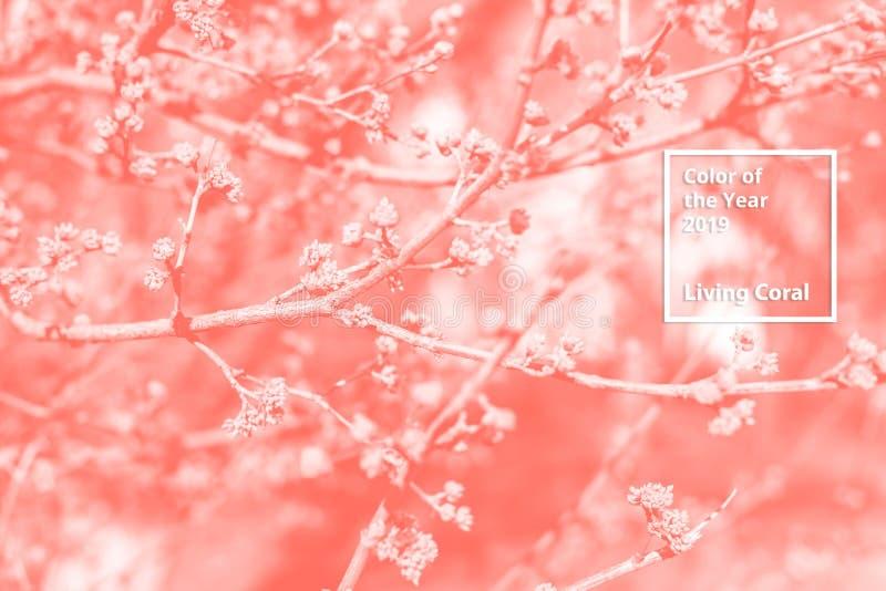 Цвет коралла года 2019 живя Флористическая естественная картина цветков, ветвей Популярная палитра тенденции для дизайна стоковые изображения