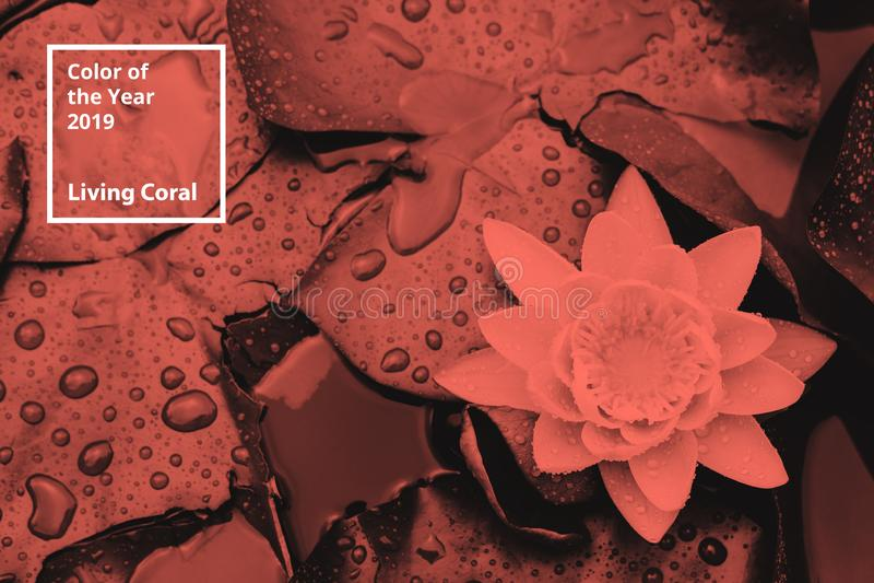 Цвет коралла года 2019 живя Флористическая естественная картина цветков, ветвей Популярная палитра тенденции для дизайна стоковая фотография