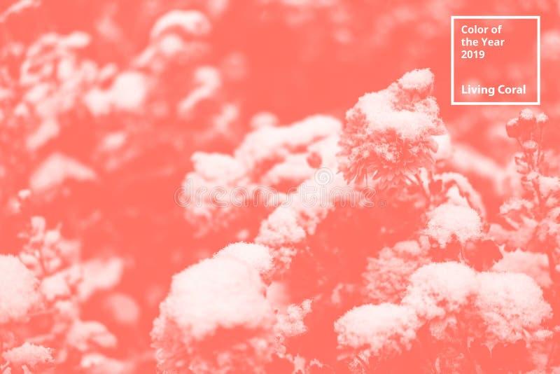 Цвет коралла года 2019 живя Флористическая естественная картина цветков, ветвей Популярная палитра тенденции для дизайна стоковое фото rf