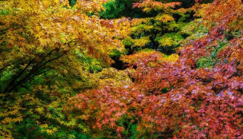 Цвет осени, штат Вашингтон стоковое изображение