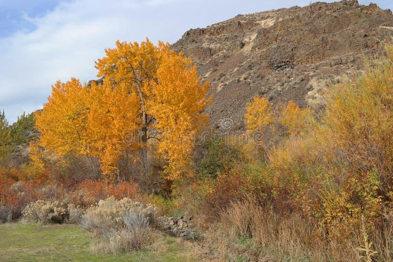 Цвет осин падения полностью стоковая фотография