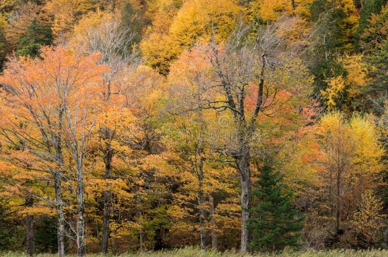 Цвет падения в Lake Placid NY стоковое изображение