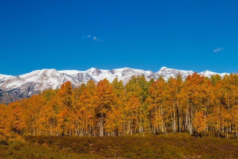 Цвет падения в Crested Butte Колорадо стоковые изображения