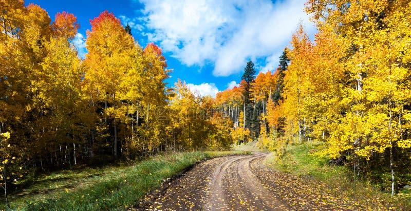 Цвет падения, дорога осени стоковое изображение rf