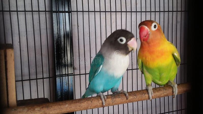 Цвет птицы стоковая фотография