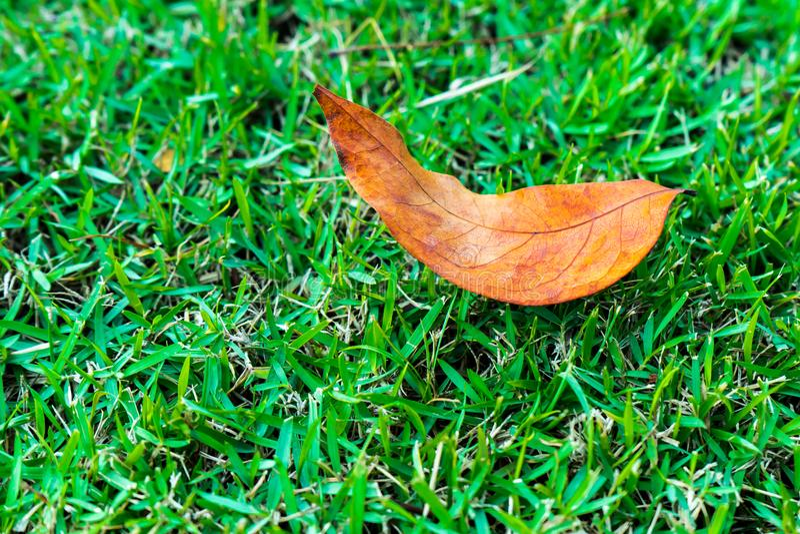 Цвет травы сада зеленый стоковая фотография rf