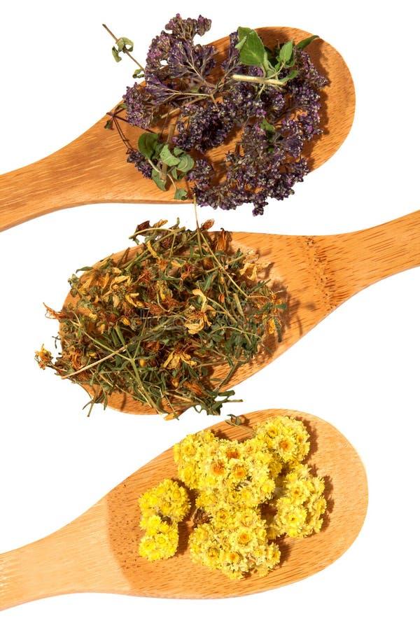 Целебные травы. стоковое изображение