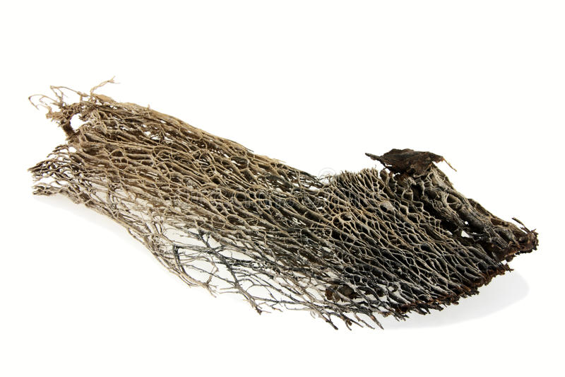 целлюлоза стоковое изображение