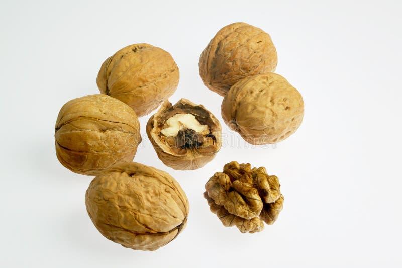 Целый грецкого ореха и отказ и раковина на белой предпосылке kalyan стоковая фотография rf