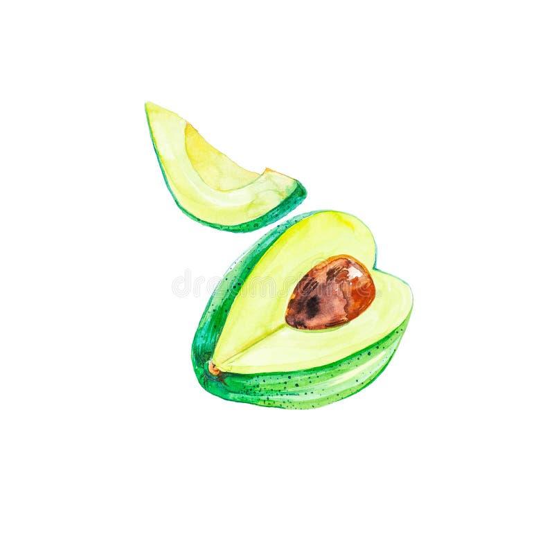 Целый и кусок авокадоа иллюстрации акварели изолированные на белой предпосылке Картина руки на бумаге бесплатная иллюстрация