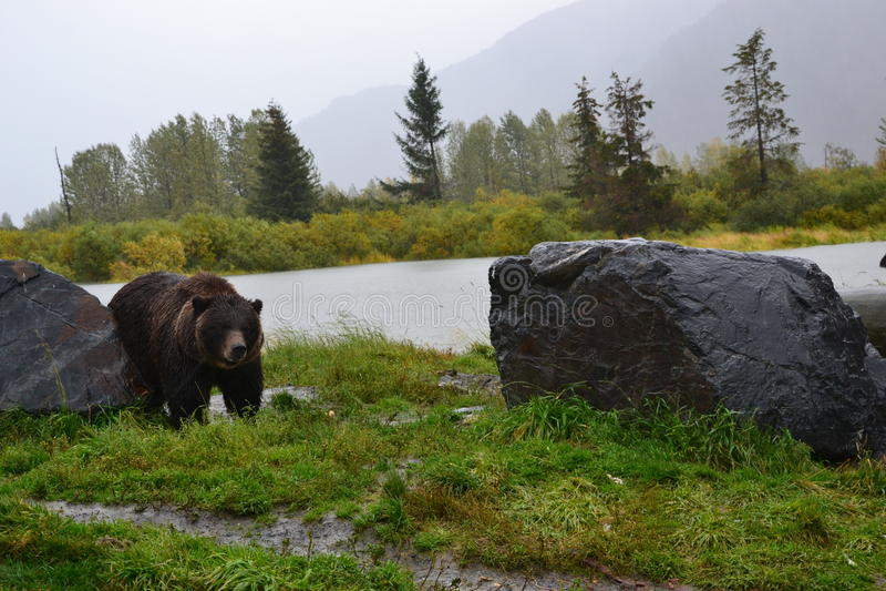 Центр 2 охраны живой природы Аляски стоковое фото