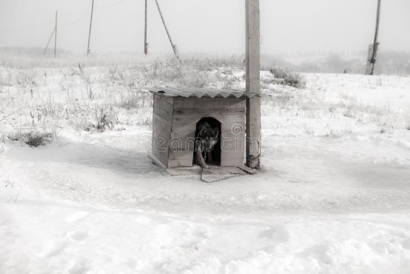 цепная собака стоковое изображение rf