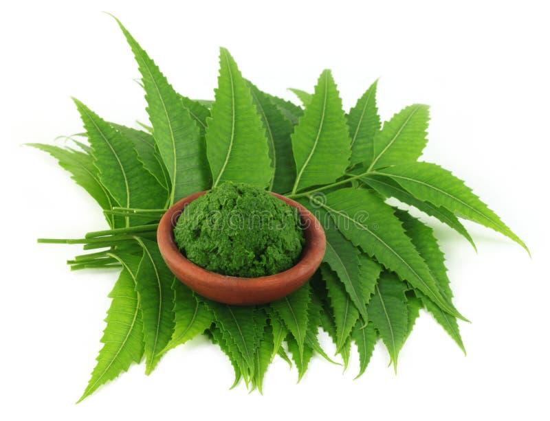 Целебные листья neem с затиром стоковое изображение rf