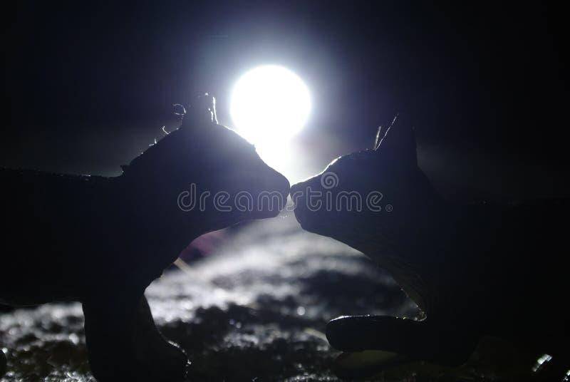 Целовать тень котов стоковая фотография rf