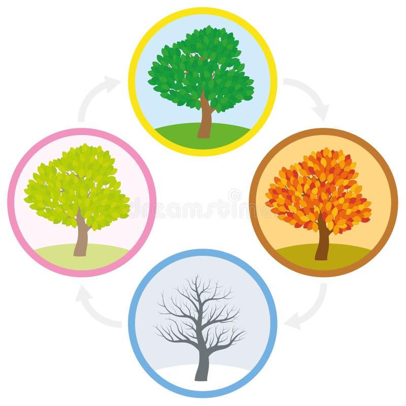 Цикл ежегодника зимы падения лета весны дерева иллюстрация штока