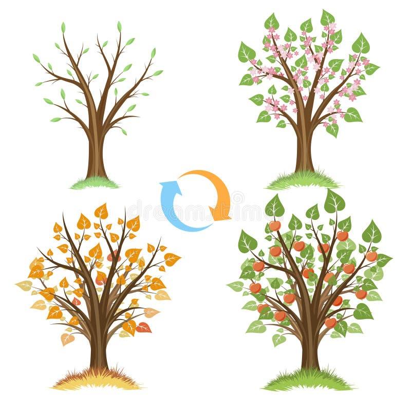 Цикл яблони сезонный бесплатная иллюстрация