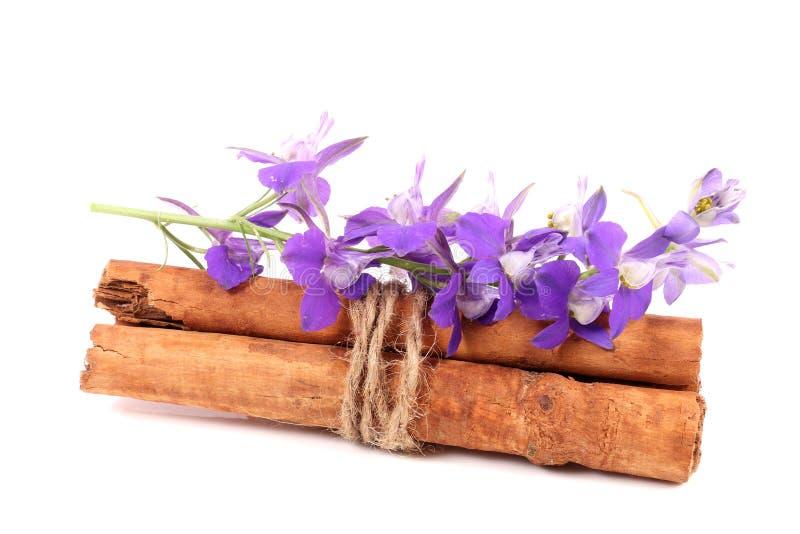 Циннамон и цветки стоковые изображения