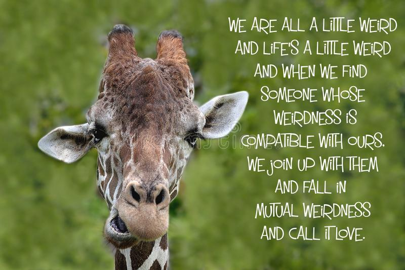 Цитата жирафа стоковые фотографии rf