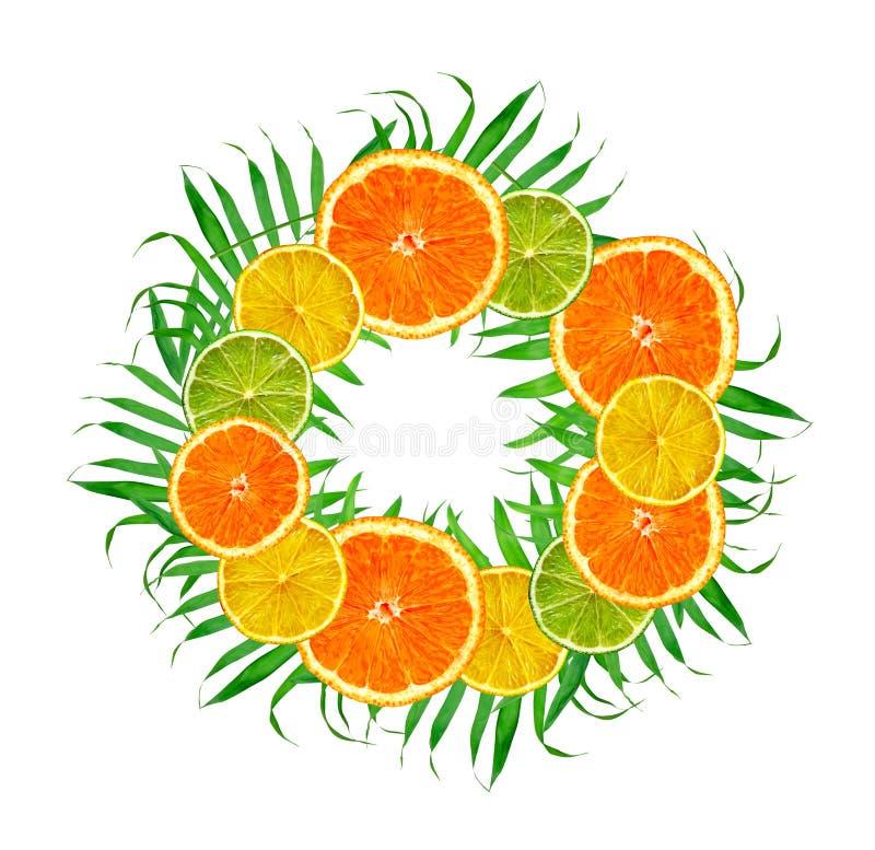 Цитрусовые фрукты: апельсин, лимон, известка на зеленом папоротнике выходит на белизну стоковое изображение rf