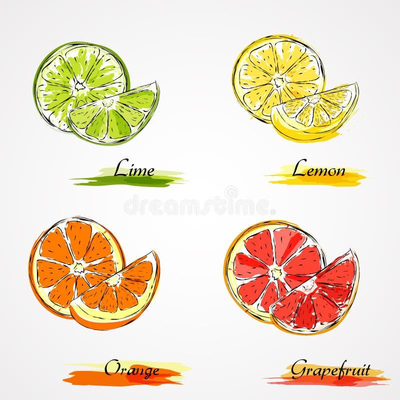Цитрусовые фрукты вектора бесплатная иллюстрация