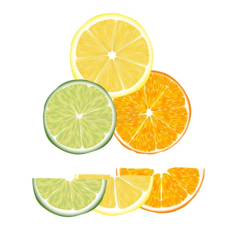 цитрусовые фрукты бесплатная иллюстрация