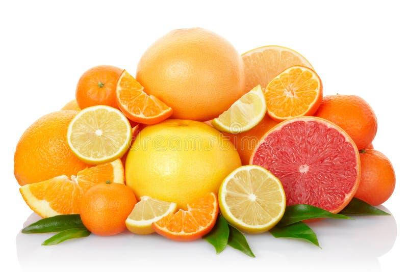 цитрусовые фрукты стоковые изображения