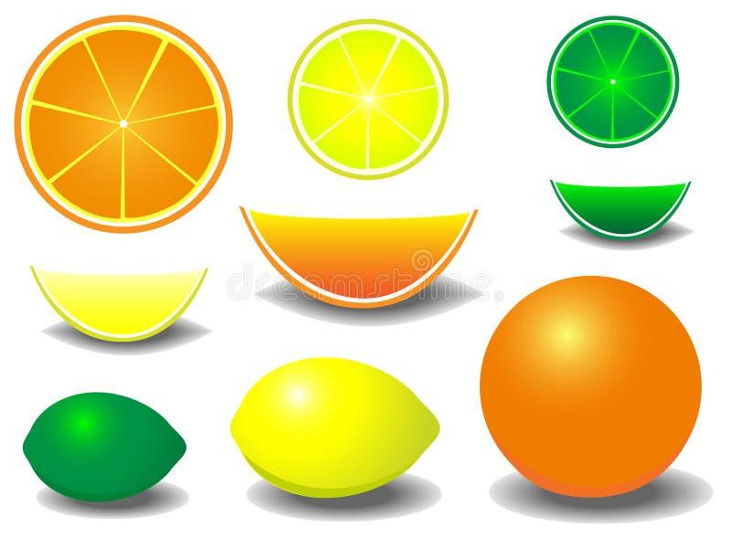 цитрусовые фрукты иллюстрация вектора