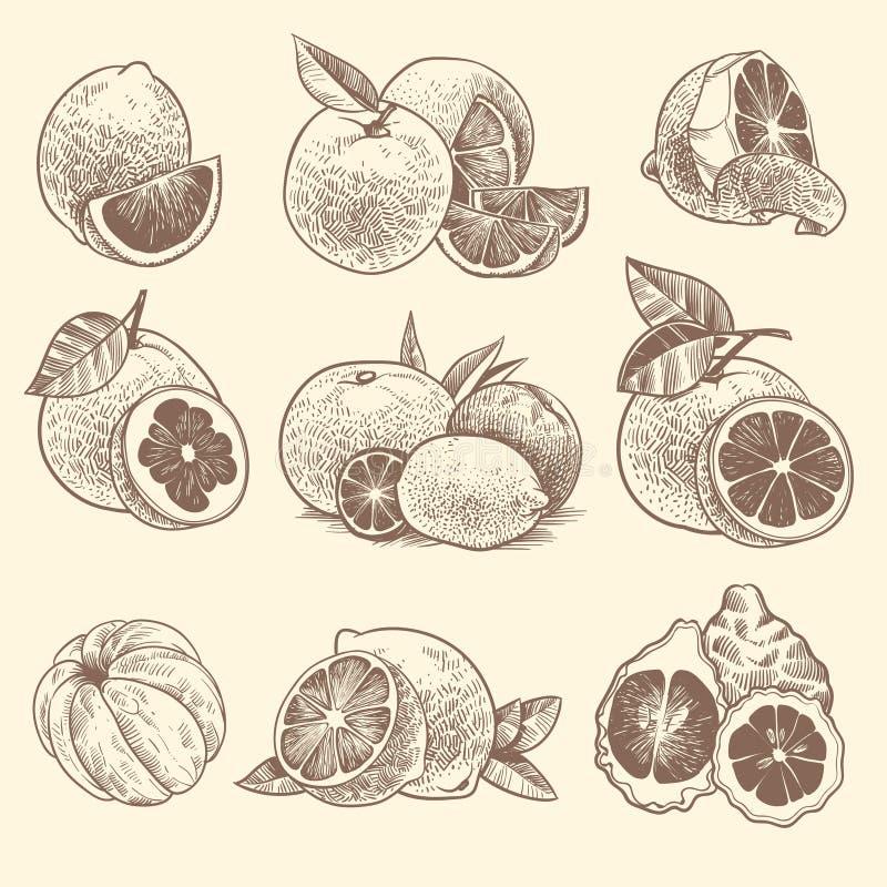 Цитрус эскиза Апельсины, лимоны и грейпфрут, известка Цитрусовые фрукты и цветок с листьями Год сбора винограда руки вычерченный  бесплатная иллюстрация