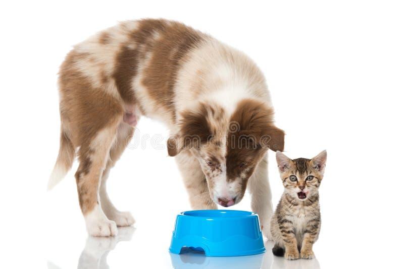 цифровой эскиз щенка котенка стоковая фотография