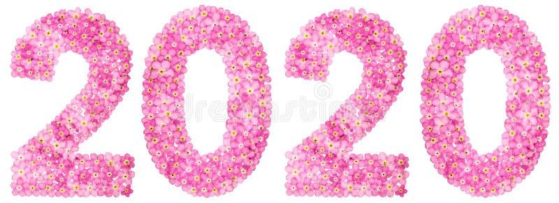 Цифр 2020 от розовых цветков незабудки, изолированных на белизне стоковые фото