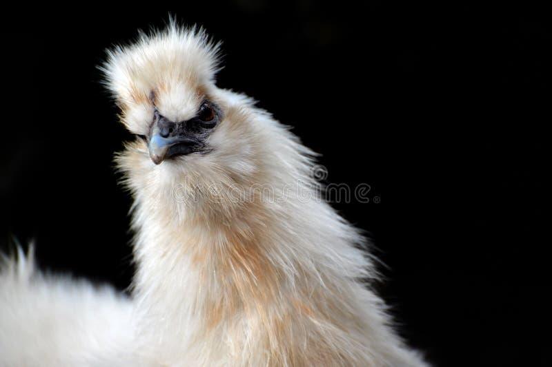 цыпленок смешной стоковые изображения