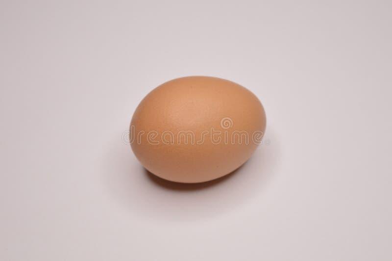 Цыпленок цыпленка яйца желтый на белой раковине предпосылки стоковые изображения rf