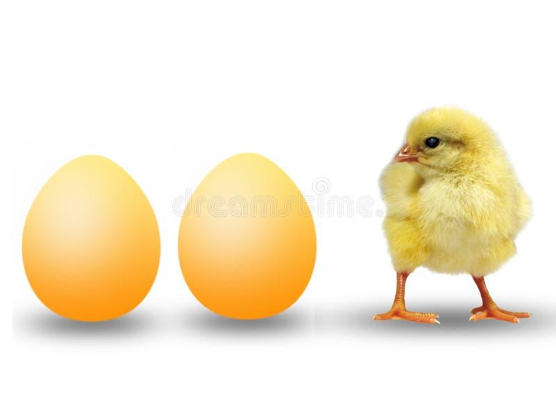 цыпленок eggs малые 2 стоковые фото