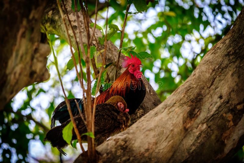 Цыплята стоят на дереве, животном пар стоковые изображения