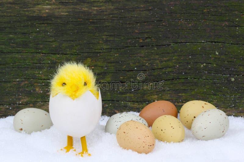 Цыпленоки и пасхальные яйца в снеге стоковая фотография rf