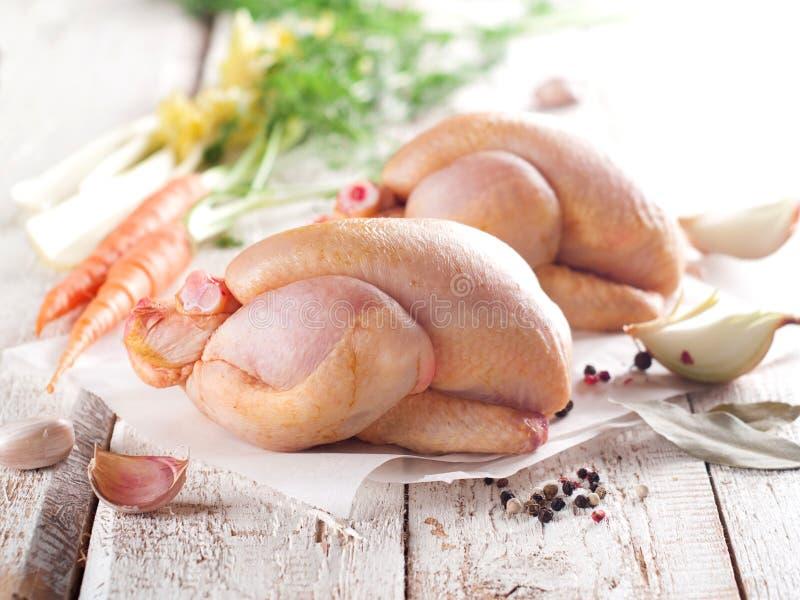цыпленок свежий стоковые фото
