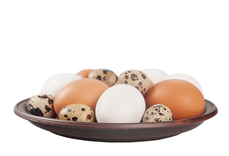 цыпленок eggs триперстки стоковое изображение rf