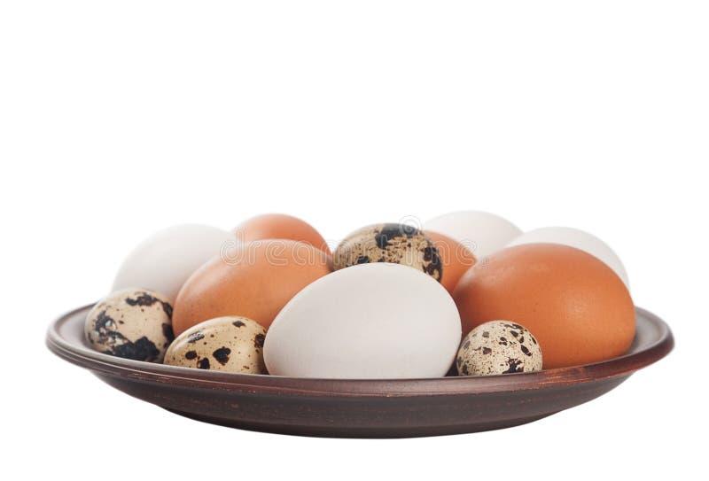 цыпленок eggs триперстки стоковая фотография rf