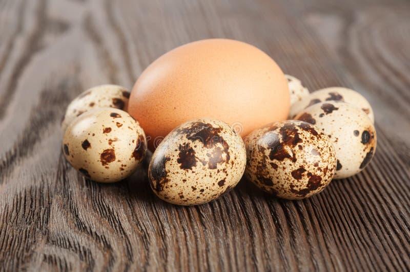 цыпленок eggs триперстки стоковая фотография