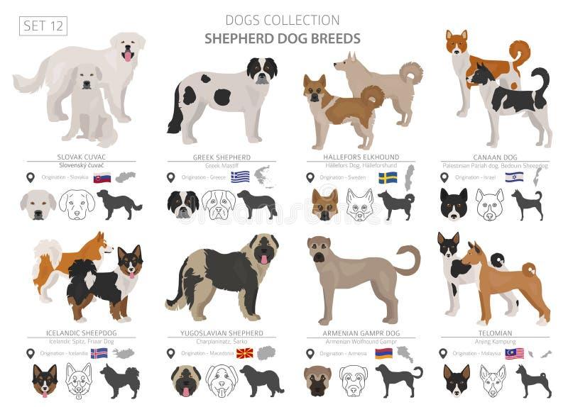 Чабан и табунить собрание собак изолированное на белизне r Другой цвет и страна происхождения бесплатная иллюстрация