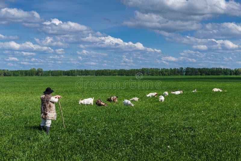 Чабан и табун коз на выгоне стоковые фото