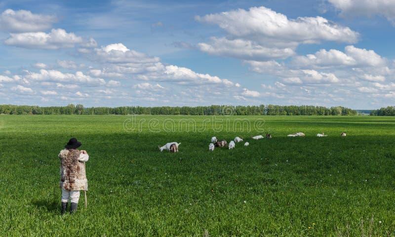 Чабан и табун коз на выгоне стоковая фотография