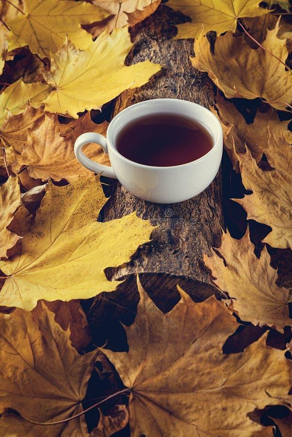 чаепитие, осенние листья, красивый осенний компоновка с чашкой чая осенний лес, время чая Понятие осеннего сезона стоковое фото rf