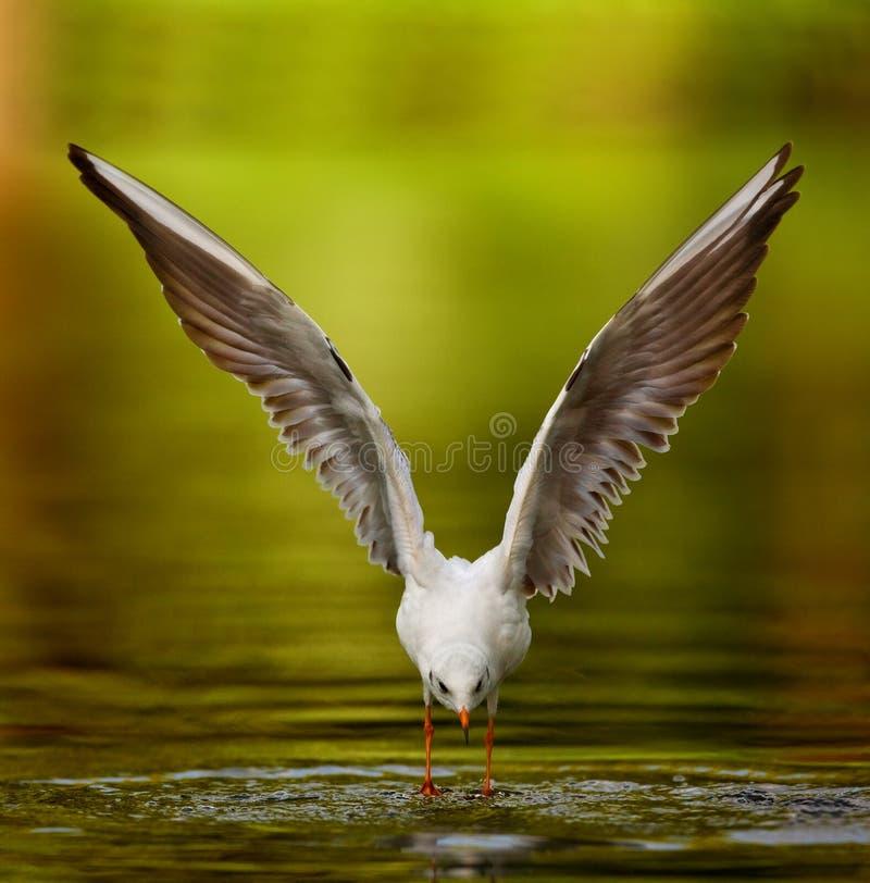 чайка ангела стоковое фото