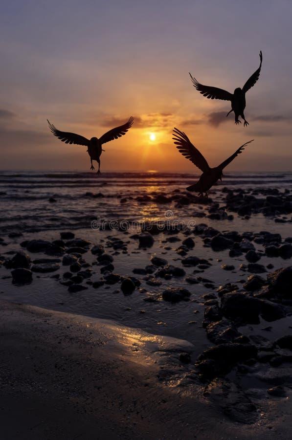 Чайка восхода солнца утра стоковые фотографии rf